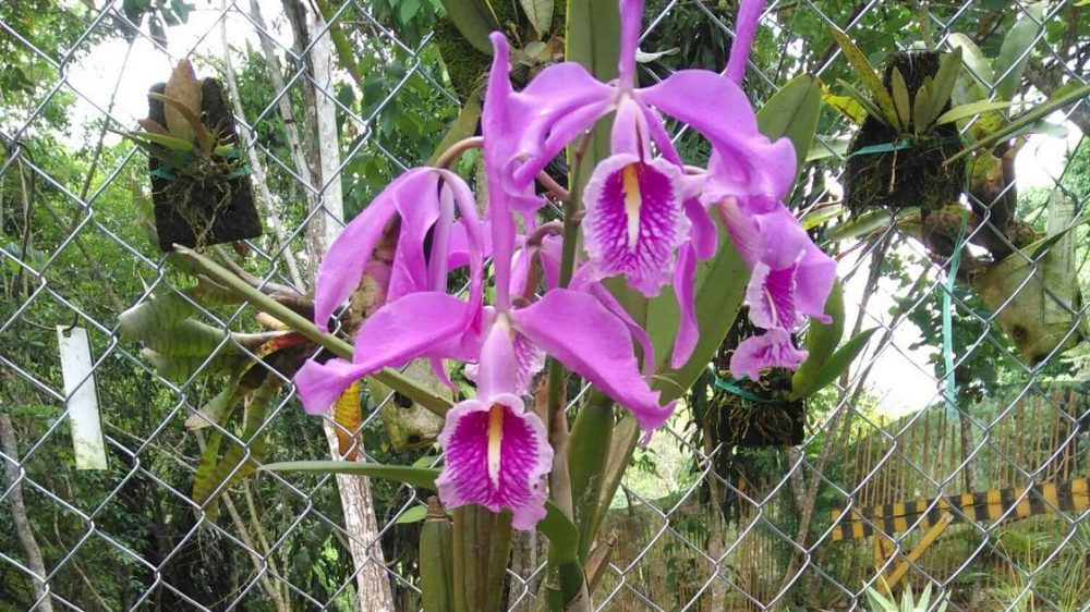 An Orchid center near Ecolodge «Cordillera Escalera»