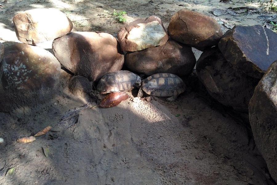 Turtles in Tarapoto