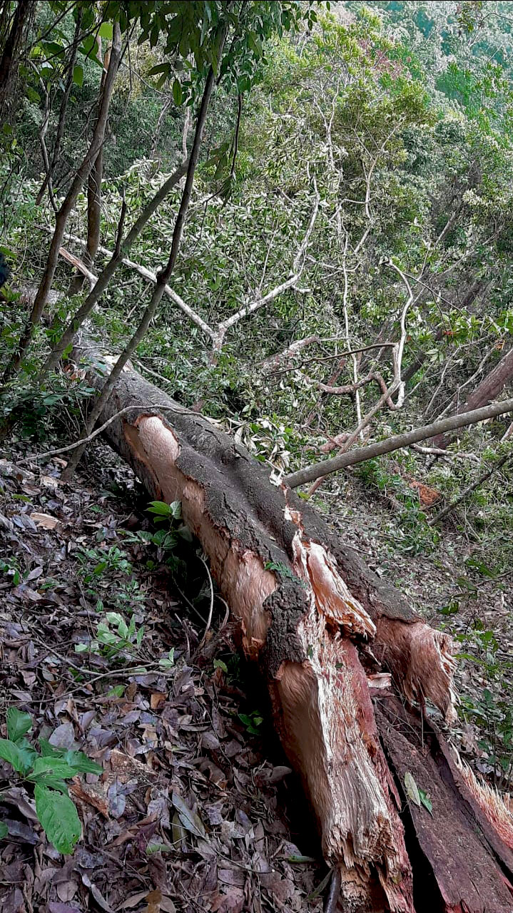 Как падают деревья